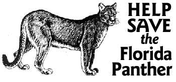 Help save the Florida Panther