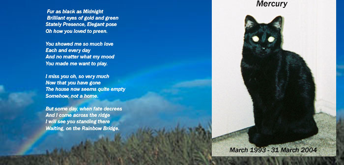 a poem for a cat that died