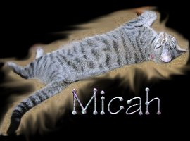 Micah the cat