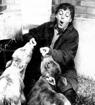 Paul McCartney on his farm